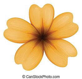 A five-petal orange flower