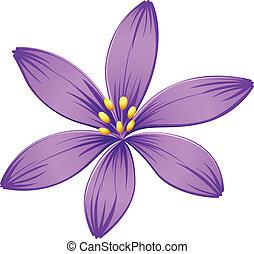 A five-petal purple flower
