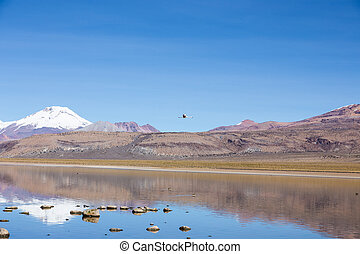 A flamingo fly with the snowcapped volcanoes Parinacota and Pomerane the background.