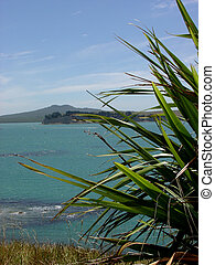 A flax bush with Auckland's famous landmark in the background - Rangitoto Island which is a national park