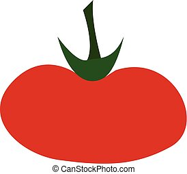 A fleshy tomato vector or color illustration - A fleshy red ...