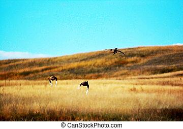 a flock of birds flies in the field