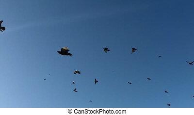 A flock of birds fly the sky.