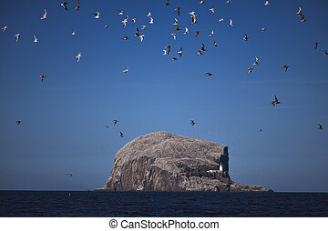 A flock of birds flying over the sea against the backdrop of the huge rock of the island