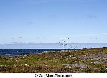 A flock of birds in a beautiful coastal landscape