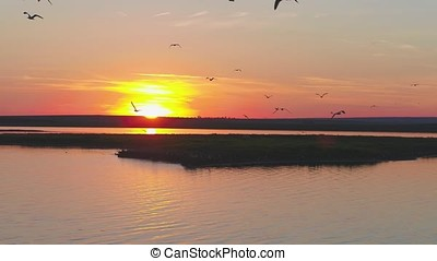 A flock of birds on the background of colorful sky. Sunset on the river. Island of gulls. Birds fly at sunset, aerial