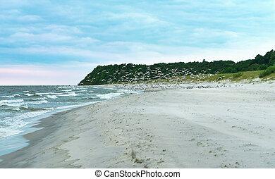 a flock of birds on the seashore