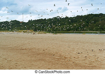 a flock of birds takes off from the sandy beach, a flock of seagulls on the coast