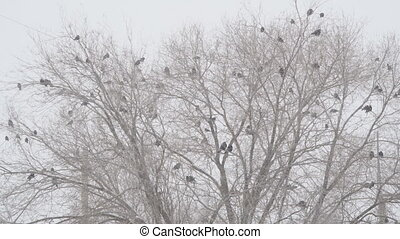 A flock of black birds on a leafless tree during a snowstorm