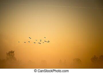 A flock of cormorants flies over the misty land - Horizontal...