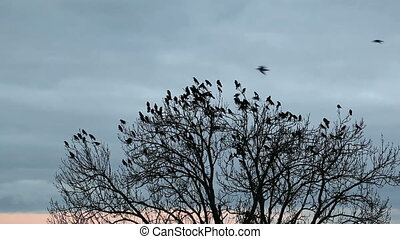 A flock of crows in a tree