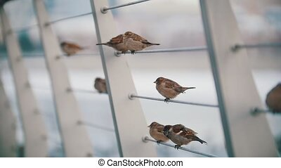 A flock of cute little sparrows sitting on the stretched...