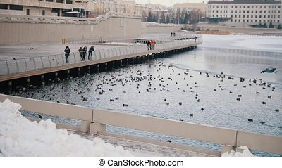 A flock of ducks swimming in the lake. People watching them....