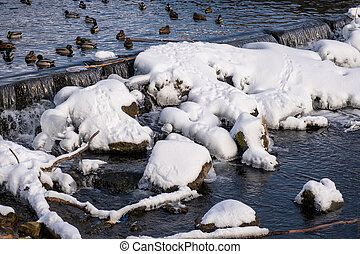 A flock of ducks swims in a winter river on a sunny day.