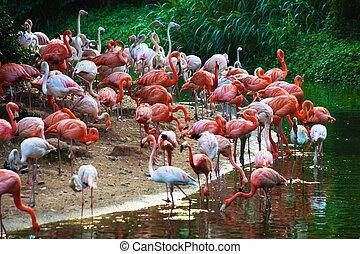 flamingos - a flock of flamingos on the lake
