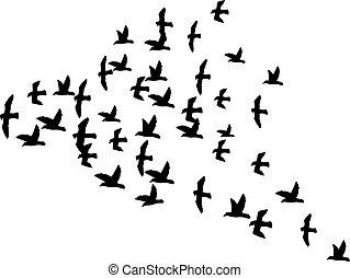 a flock of flying birds (silhouette of the birds in flight)