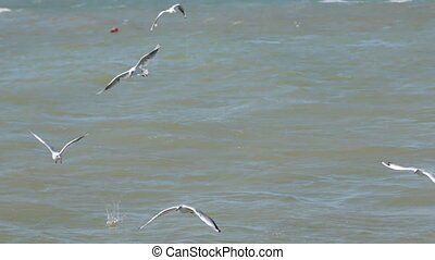 A flock of gulls flying low over the waves and eating bread.