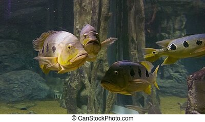 A flock of large fish in the water