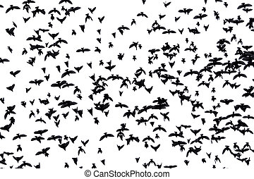 A flock of migratory birds.
