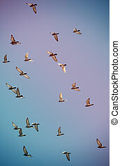 A flock of pigeons flying in the sky with a retro filtered