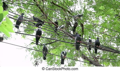 A flock of pigeons on cables
