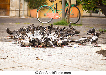 A flock of pigeons on the street