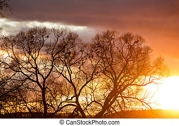 A flock of raven in the trees against the backdrop of a bright beautiful sunset