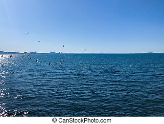 A Flock Of Seabirds Fly Over The Blue Sea