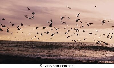 a flock of seabirds gulls and Ocean Beach with the wind 1