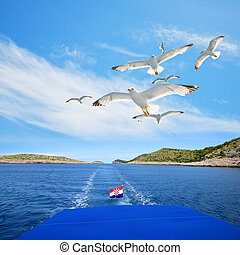 A flock of seagull flying above the sea in Kornati National Park, Croatia.