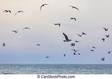 A flock of seagulls and cormorants over the sea