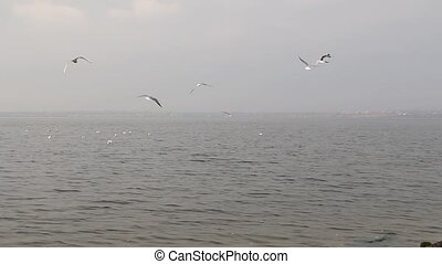 A flock of seagulls arrives at the beach early in the morning. Autumn day with fog.