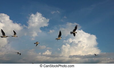 A flock of seagulls flies against the beautiful cloudy sky,...
