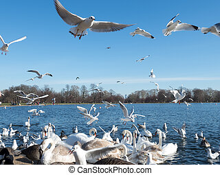 A flock of seagulls flying against blue sky