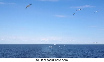 A flock of seagulls flying behind a cruise ship on a bright ...