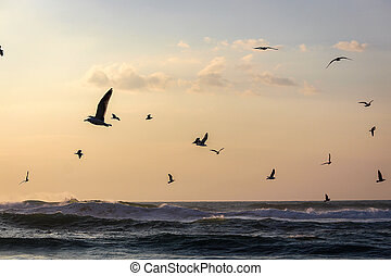 A flock of seagulls flying over the sea