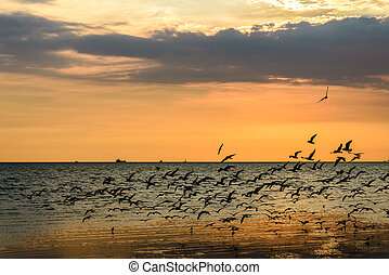 A Flock of Seagulls in Sky