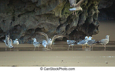 A flock of seagulls in the sand, Sintra, Portugal
