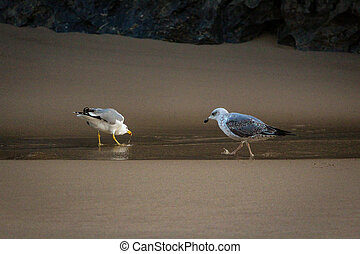 A flock of seagulls in the sand