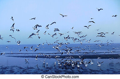 a flock of seagulls on the shore of