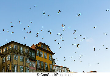 A flock of seagulls over the facades of the houses in Porto, Portugal.