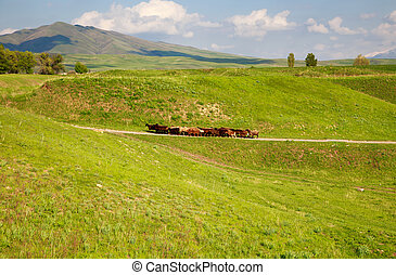 A flock of sheep goes on a mountain road among the green hills. Farm work. Background for agriculture.