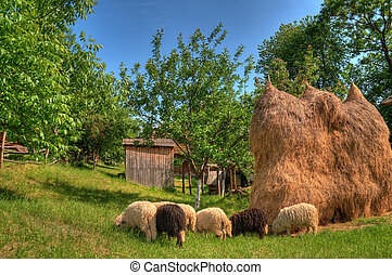 a flock of sheep grazing in the meadow