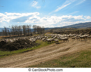 a flock of sheep grazing on the hill