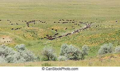a flock of sheep in nature