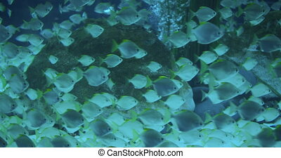 A flock of tropical fish floating in an aquarium