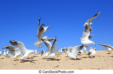 flock of young seagulls catching food