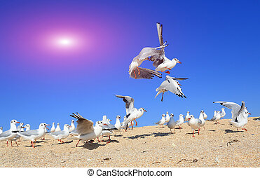 A flock of young seagulls
