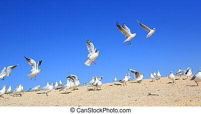 A flock of young seagulls catching food
