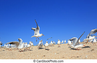 A flock of young seagulls over seashore